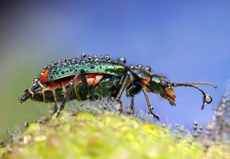 Мир насекомых - №16