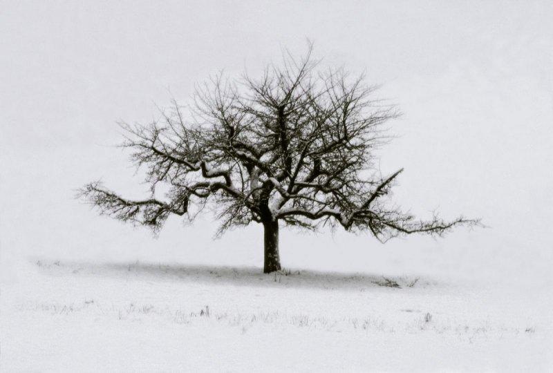 Портреты деревьев - №17