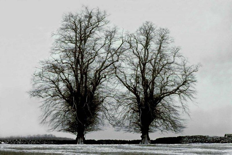 Портреты деревьев - №12