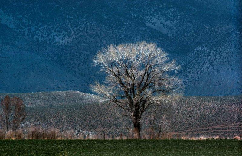 Портреты деревьев - №14