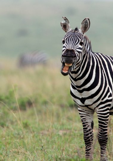 Фотографии животных - №10