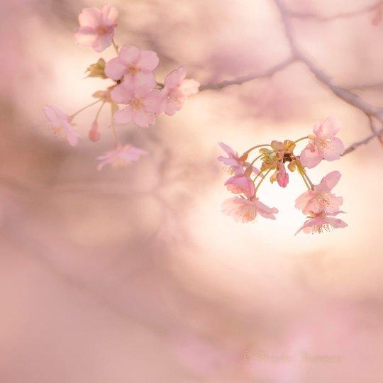Фотограф Miyako Koumura - №15