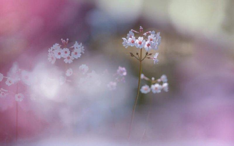 Фотограф Miyako Koumura - №11