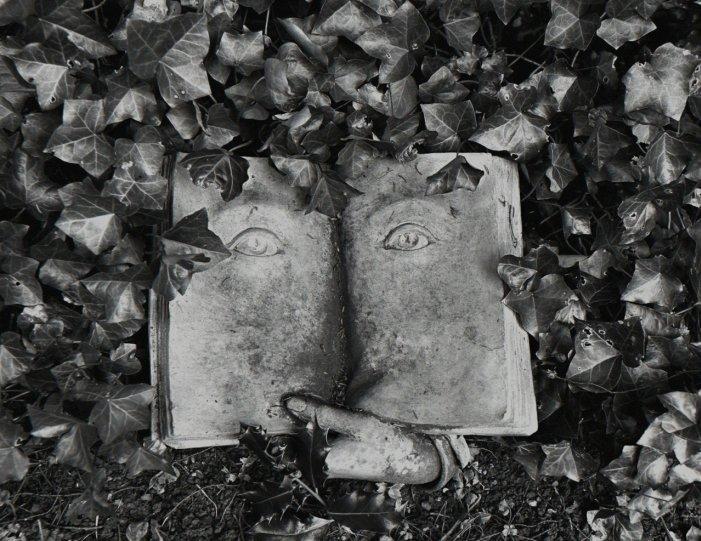 Мир чёрно-белой фотографии - №10