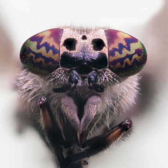 Макросъёмка насекомых - №2