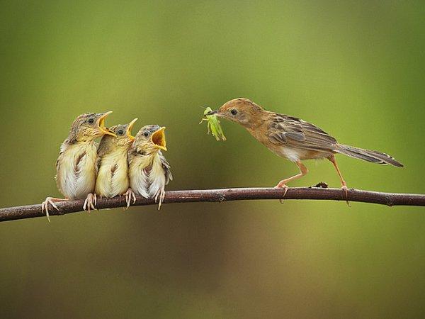 Фото съемка птиц. Лучший момент в кадре - №15