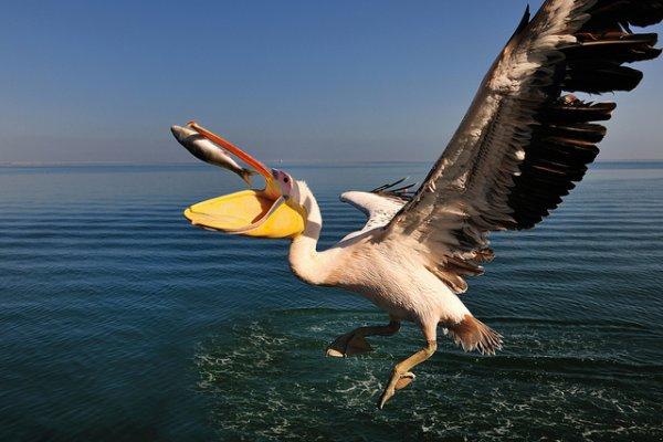 Фото съемка птиц. Лучший момент в кадре - №23