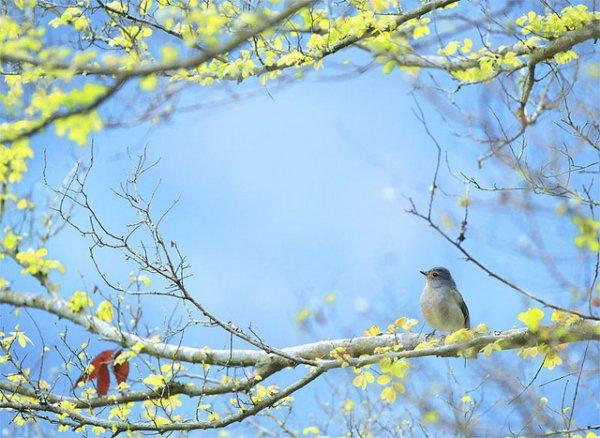 Фото съемка птиц. Лучший момент в кадре - №27