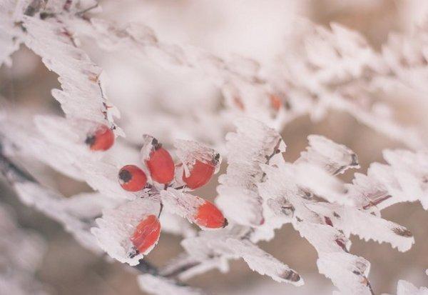 Зимние фото пейзажи из Крыма - №5