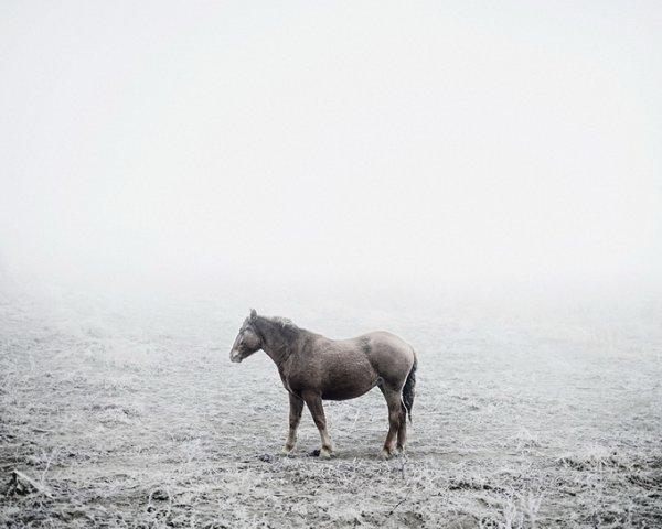 Граница между документальным и художественным фото. Tamas Dezso - №13