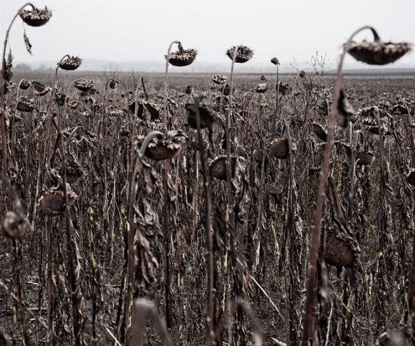 Граница между документальным и художественным фото. Tamas Dezso - №21