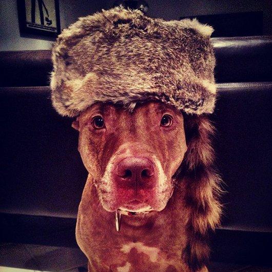 Скаут – самая спокойная в мире собака в блоге Фото юмора - №1