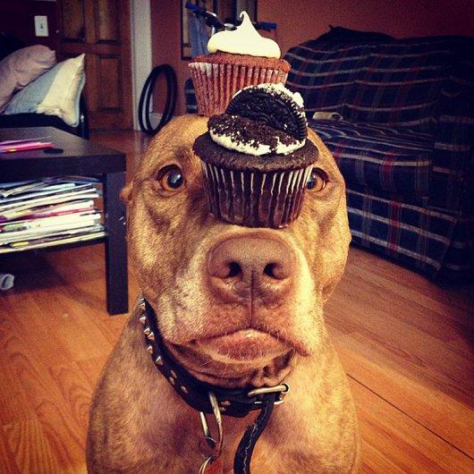 Скаут – самая спокойная в мире собака в блоге Фото юмора - №5