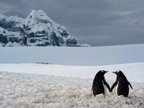 Удивительные и красивые фото кадры природы - №4