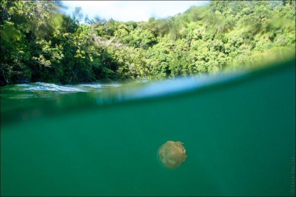 Красивые фото озера медуз - №16