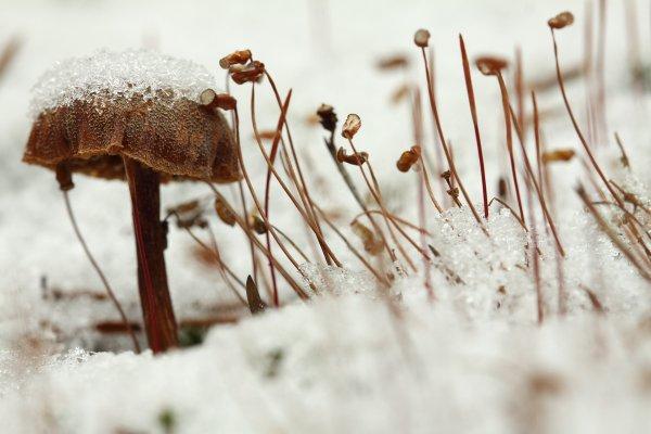 Урок фотографии. Поиск сюжетов для съемки зимой - №11