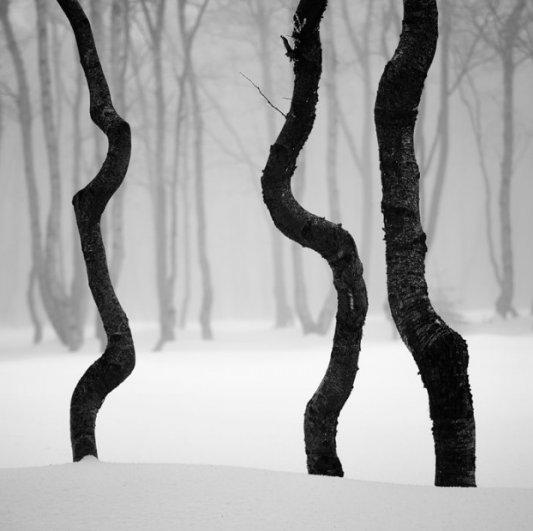 Урок фотографии. Поиск сюжетов для съемки зимой - №15