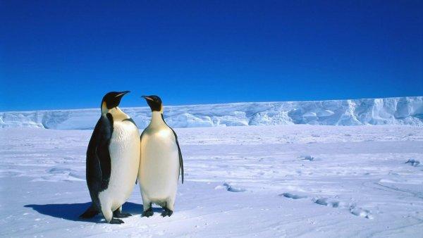 Загадочно спокойный мир Антарктиды - №10