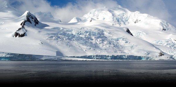 животный мир Антарктиды фото