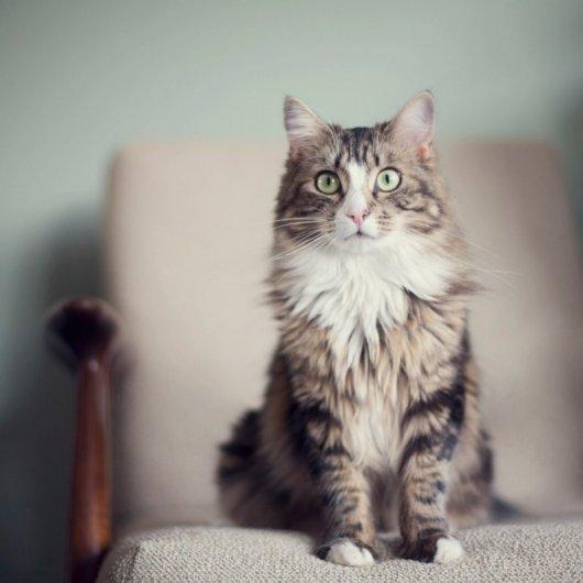 Кошки в восхитительных и милых фото - №4