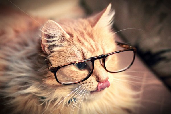 Кошки в восхитительных и милых фото - №8