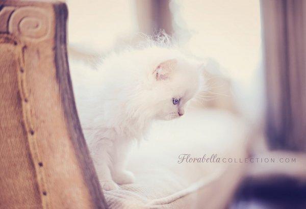 Кошки в восхитительных и милых фото - №16