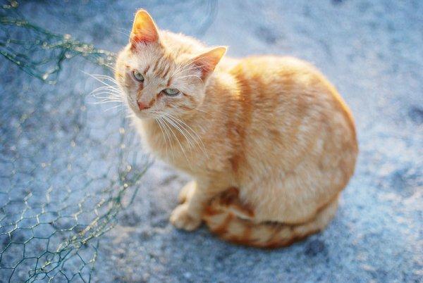 Кошки в восхитительных и милых фото - №20