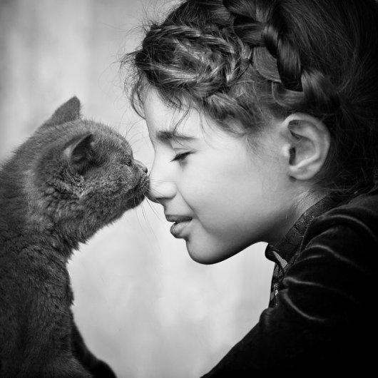 Кошки в восхитительных и милых фото - №24