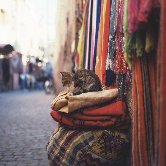 Кошки в восхитительных и милых фото - №28