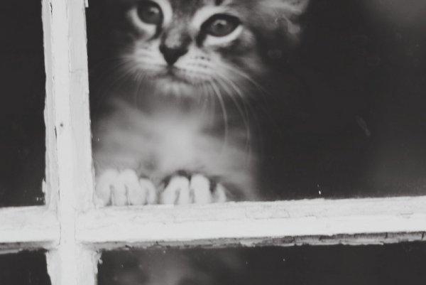 Кошки в восхитительных и милых фото - №32