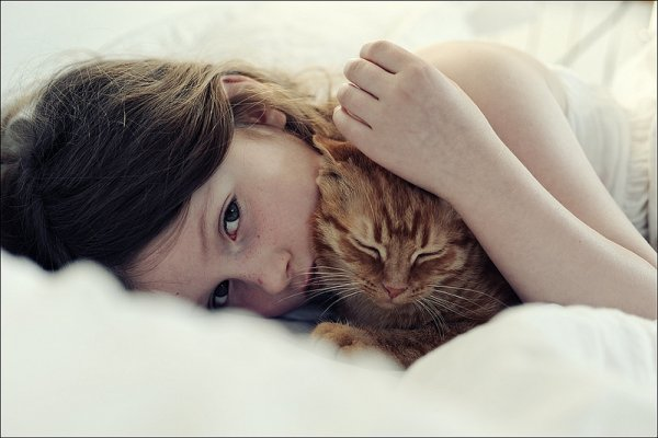 Кошки в восхитительных и милых фото - №36