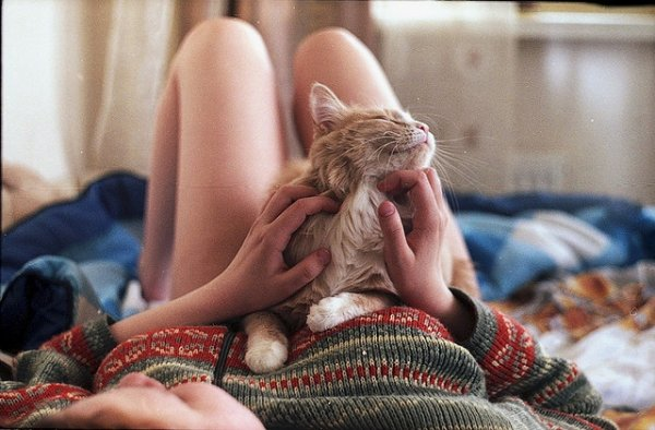 Кошки в восхитительных и милых фото - №40