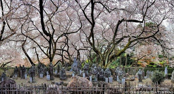 Самые красивые фотографии цветения сакуры - №6