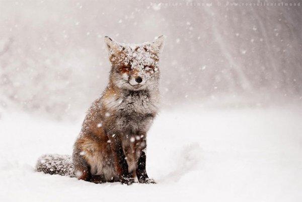 Насладитесь милыми фотографиями рыжей лисы - №2