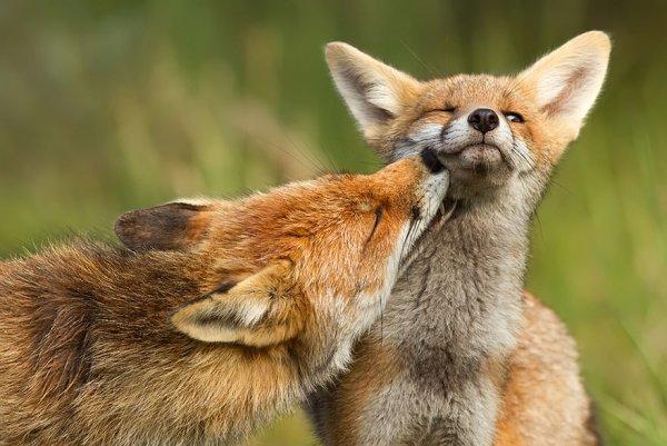 Насладитесь милыми фотографиями рыжей лисы - №10