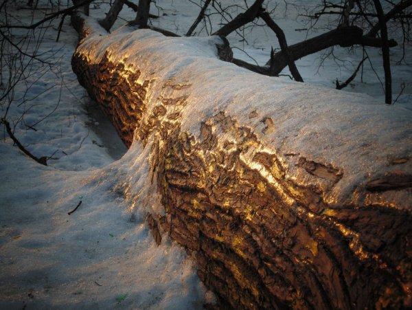 Ствол упавшего дерева