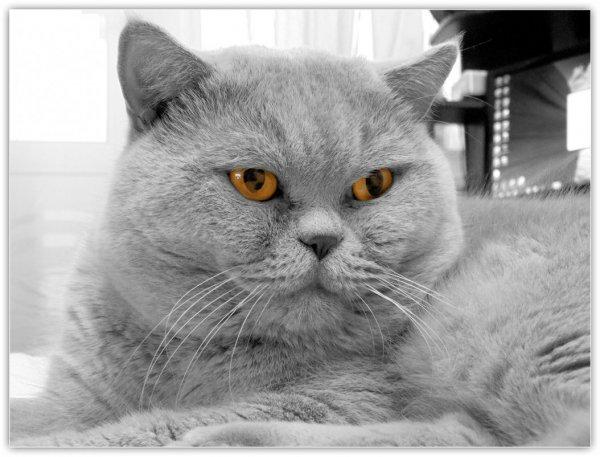 Наш кот Пашка