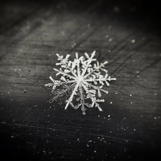 SNOWFLAKE by Andrew B. White