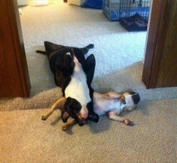 Спящие собаки