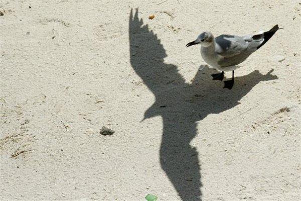 игра теней фотографии
