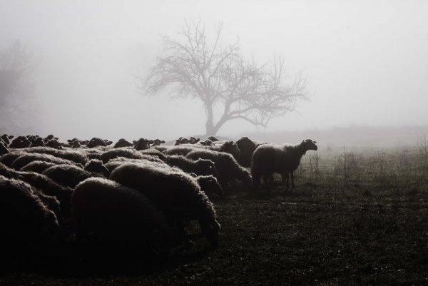 сельский пейзаж фото