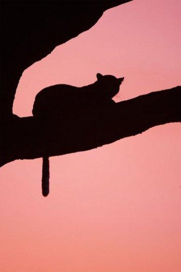 смотреть закат солнца