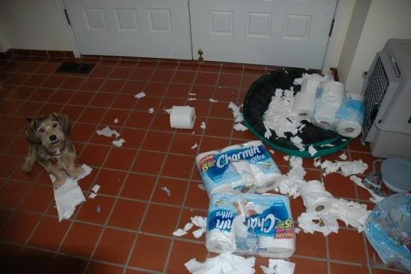 1. Меняют туалетную бумагу.