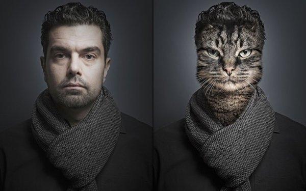 Домашние кошки