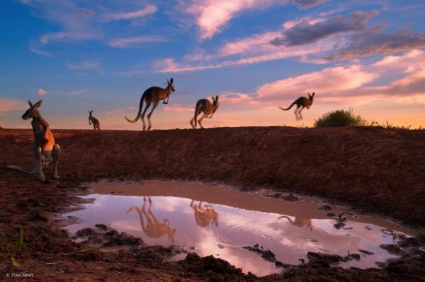 фото дикая природа © Theo Allofs