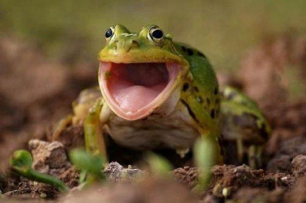 эмоции радости животных у жабы