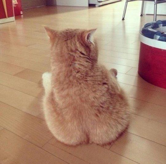 смотреть жизнь кота