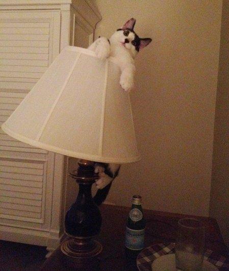 фотографии кошек и котят
