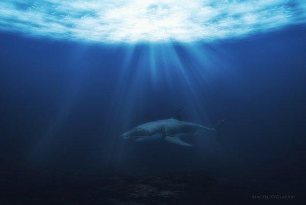 Опасные акулы Фото: Мацей Зигларски (B.D.D)