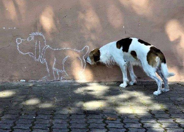 удачные фото с собаками